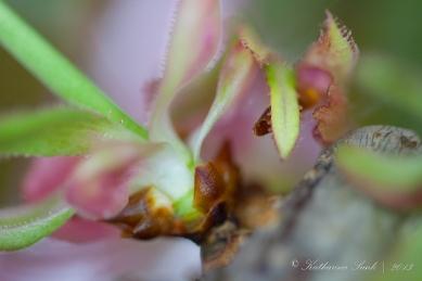 Frühling 2013 © Katharina Sunk