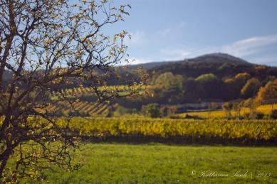 Herbst 2013 © Katharina Sunk