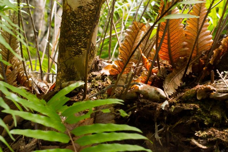 Daintree Rainforest © Katharina Sunk