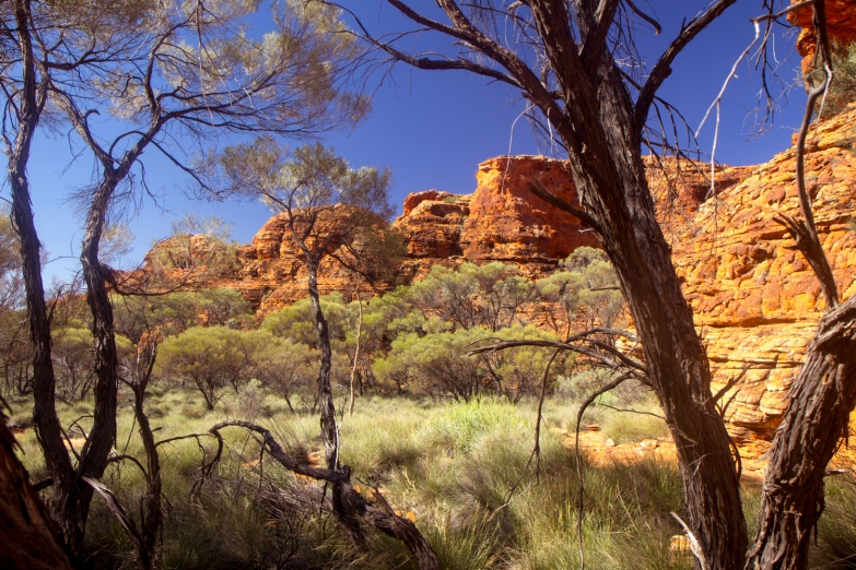 Kings Canyon © Katharina Sunk