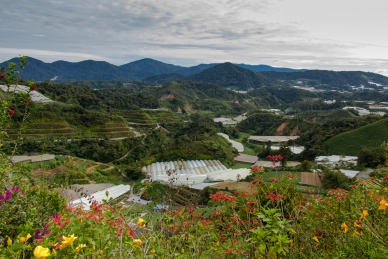 Cameron Highlands © Katharina Sunk