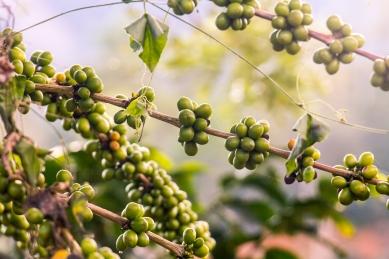 Coffee farm in Antioquia © Katharina Sunk