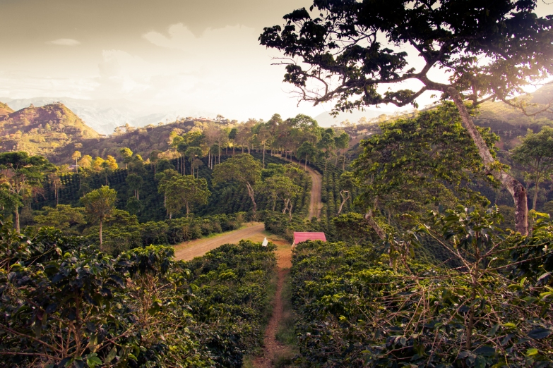 Coffee farm in Antioquia © Katharina Sunk