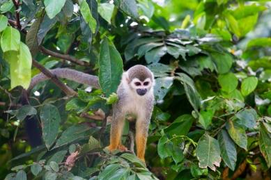 Monkey Island © Katharina Sunk