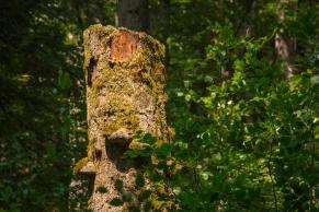 Wildnisgebiet Dürrenstein © Katharina Sunk